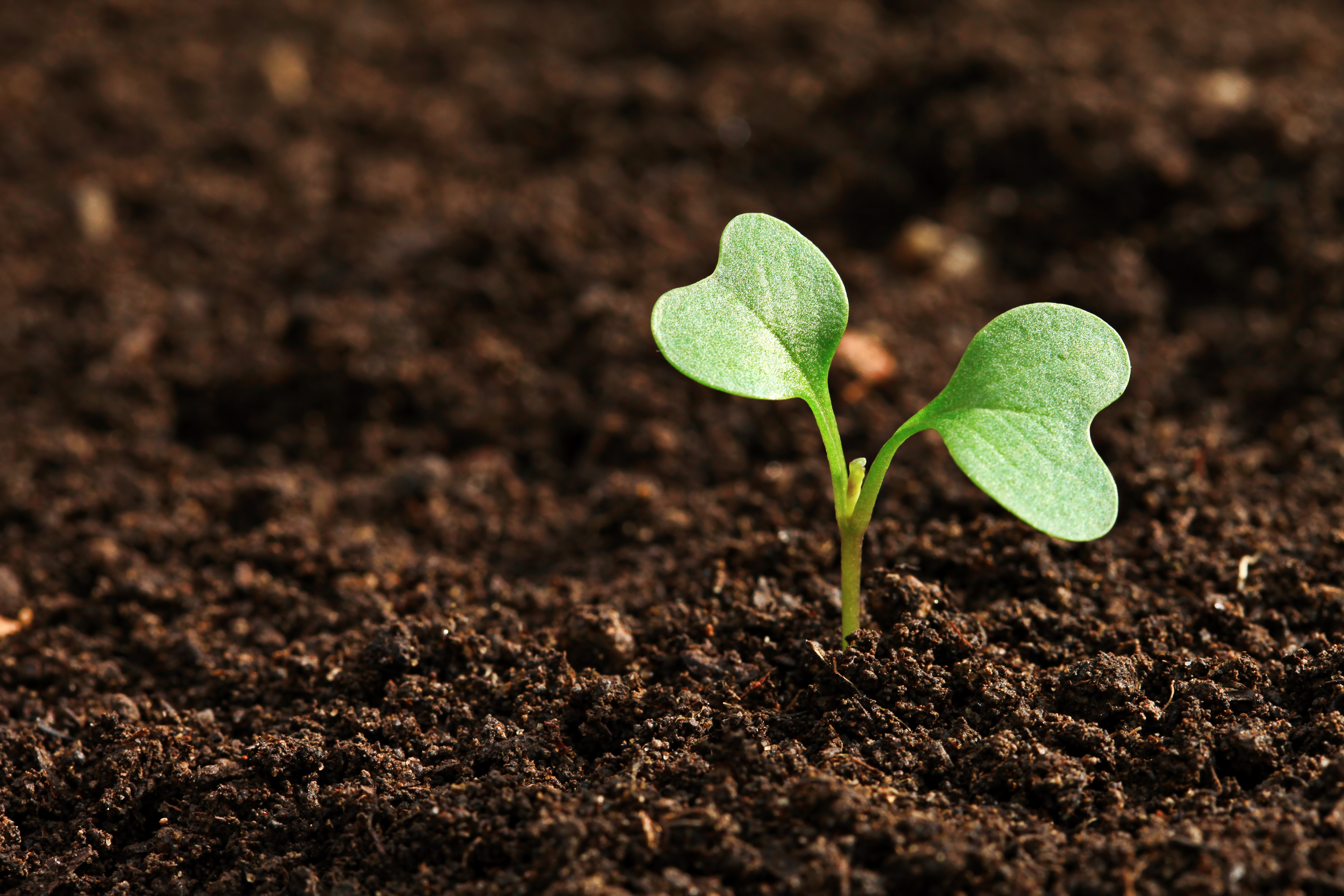 Your word for this day what type of soil are you for What does soil contain