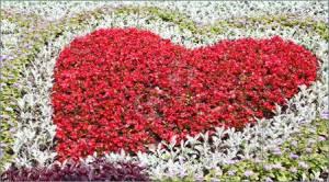 Flower-Garden-1936484